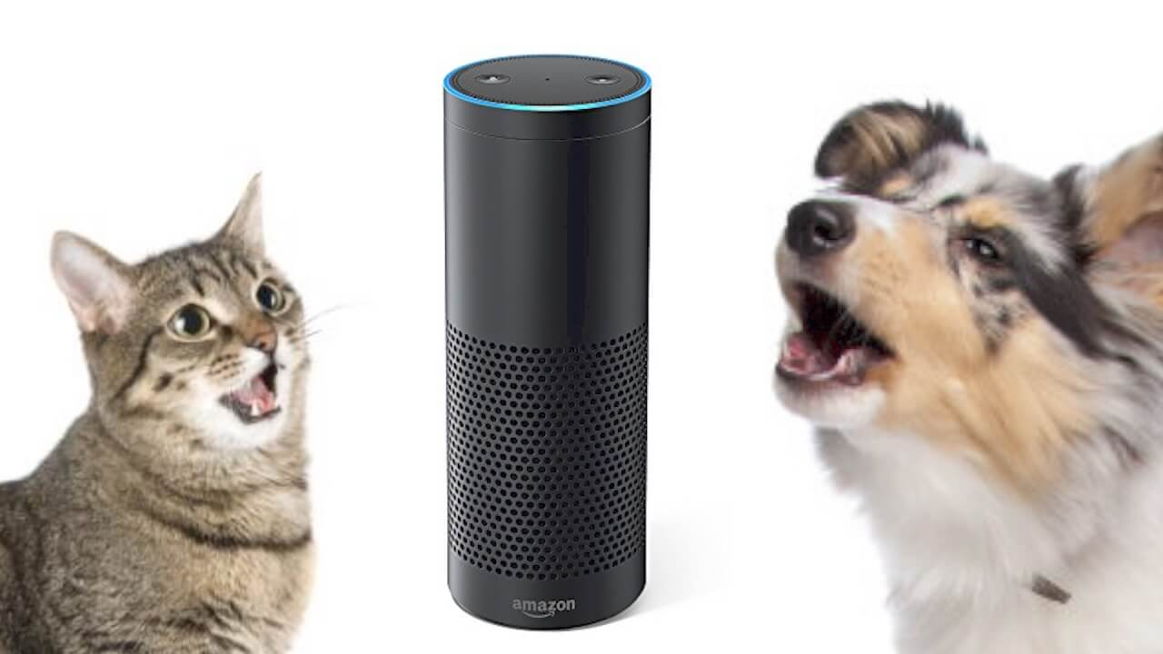 Amazon Alexa Skills - Talk to Your Cats